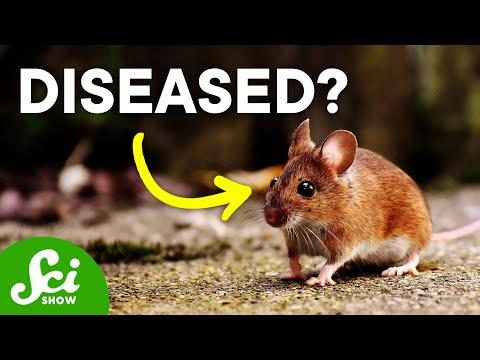 Disease Ecology | SciShow Talk Show