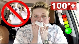 DON'T LEAVE YOUR DOG IN THE CAR | Sitting in a HOT Car by Pickles12807