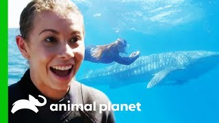 Bindi Swims With A Whale Shark And Names Him After Her Dad! | Crikey! It's The Irwins by Animal Planet