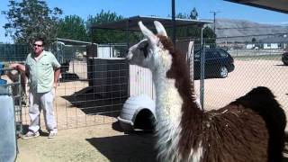 Hesperia (CA) United States  city pictures gallery : Zoo Animals at the Hesperia California Zoo [HD]