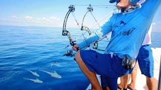 Video Bow Fishing for Tuna Fish download in MP3, 3GP, MP4, WEBM, AVI, FLV January 2017