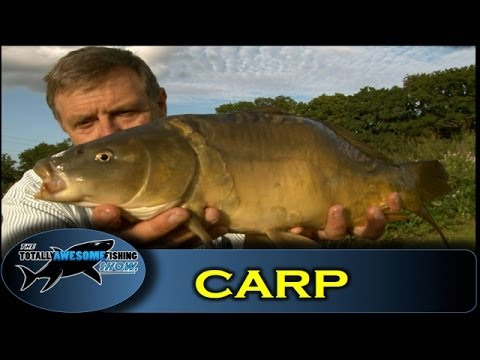 Carp fishing with Bread – The Totally Awesome Fishing Show