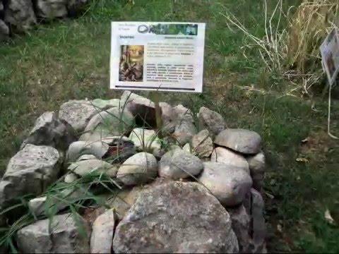 immagini spettacolari scattate nell'orto botanico di napoli