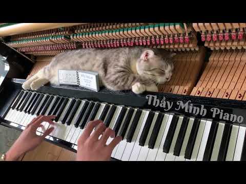 Буги-вуги массаж для мохнатого настройщика пианино