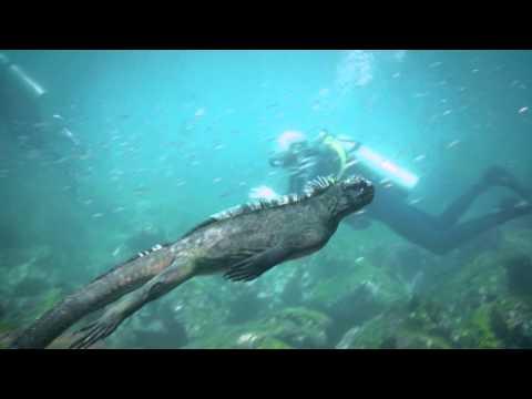 潛水夫在海中突然發現「酷斯拉」從身旁游過,而牠接下來的「超可愛動作」讓大家忍不住看到發呆!