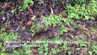 Les Loges-en-Josas France  city pictures gallery : Ruisseau de la Garenne des Loges - Les-Loges-en-Josas - 10/01/2016