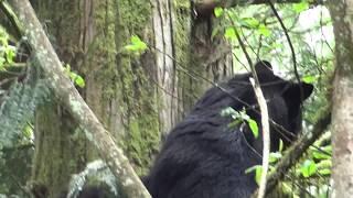 STONER Wildlife Moment The THREE BEARS! by Urban Grower