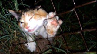 Video 7 unbelievable animal rescues MP3, 3GP, MP4, WEBM, AVI, FLV Agustus 2019