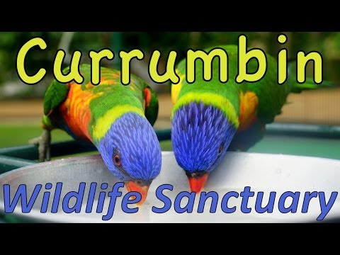 Currumbin Wildlife Sanctuary #ThisIsQueensland