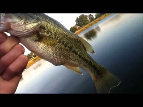 RCF: Pond Fishing Ep.4: Fat Small Bass