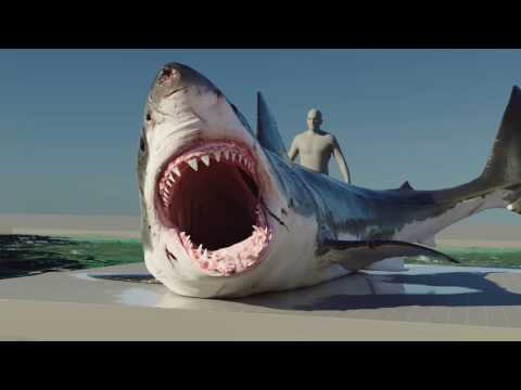 The Shallows (2016) -  VFX Breakdown - By ILP
