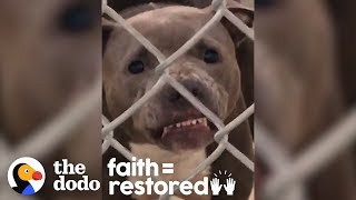 No One Thought This Growling Pit Bull Would Make It Out Of The Shelter  | The Dodo Faith = Restored by The Dodo