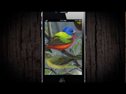 Video of iBird Lite