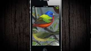 iBird Yard Plus Guide to Birds YouTube video