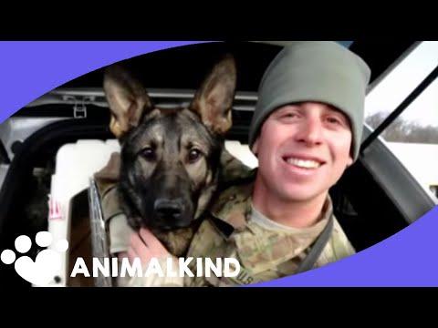 il-cane-si-ricongiunge-col-padrone-soldato-allaeroporto-lasciando-i-presenti-in-lacrime