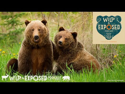 Curious Minds in the World of Wildlife Photography - Wild and Exposed Podcast
