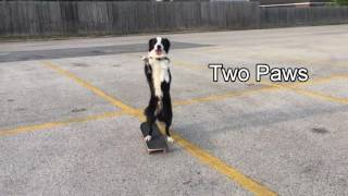 animale cainele pe skateboard