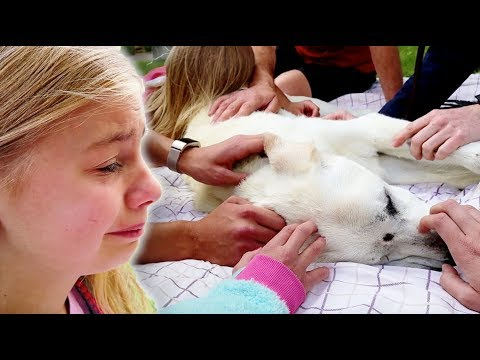 Saying Goodbye To our BEST FRIEND Polar! Emotional Dog Funeral.