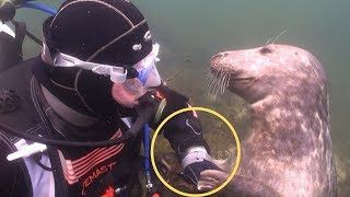 Diver Confused What Playful Seal Wants— Until He Stretches Out His Hand by Did You Know Animals?