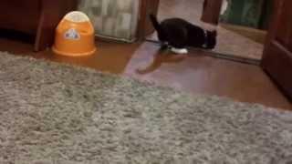 Кошак выполняет команду