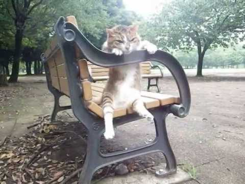 Un gatto seduto comodamente