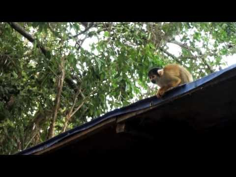 Tour du monde Jerome – Jungle Bolivie – Travel around the world