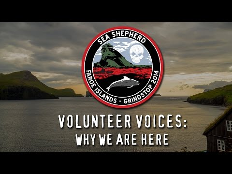 Operation GrindStop 2014: Volunteer Voices