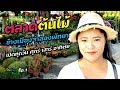 Download Lagu ตลาดต้นไม้ข้างเมืองจำลองพัทยา   เปิดโลกต้นไม้ Ep.1  Aranya Channel Mp3 Free