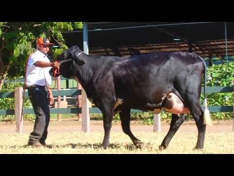 LOTE 61