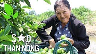 Sao thần nông | Trồng chanh: Nông dân đi lên từ khó khăn trở thành tỷ phú