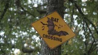 Fredricksburg (TX) United States  city images : Bats at Old Tunnel State Park: Visit Fredericksburg TX