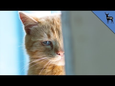 Cry - Some animals can produce tears like humans but do they actually cry because they're upset? We're putting out new episodes every day of the week, so please tune in daily and subscribe!...
