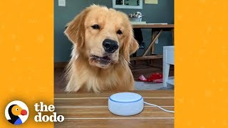Dog Finds Out What Other Animals Sound Like And Is Not Impressed | The Dodo by The Dodo