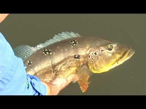 Bom de Pesca - Clip de abertura