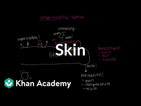 Meet the skin! (Overview) (video) | Khan Academy