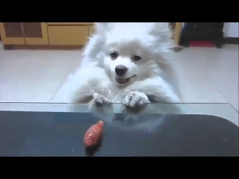 Funny Dog Videos Compilation 2016