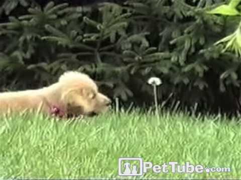 cucciolo-vs-fiore-260
