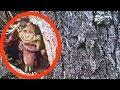 Download Lagu 5 Criaturas Míticas REAIS Capturadas por Câmera Mp3 Free