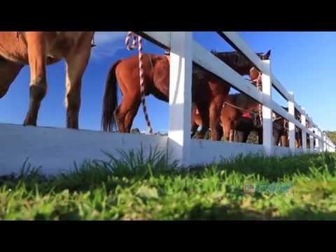 Horseback Winery Tours, Mornington Peninsula, Australia