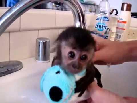 tenera scimmietta fa il bagnetto!