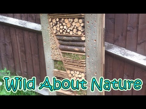 Bug Hotel Builds...How successful were they for bees & insects?