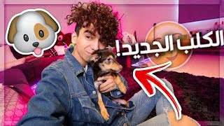 Video I Bought a Dog for My New House! (Check out My Friends' Reactions) MP3, 3GP, MP4, WEBM, AVI, FLV Juni 2018