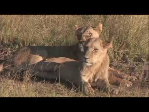 Африка. Республика  Ботсвана. Природа, тайны, путешествия. (видео)