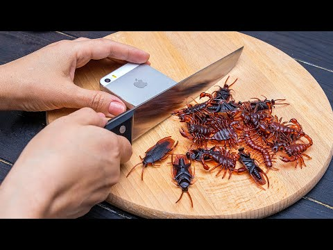 Sushi From Insects And Rotten Fish