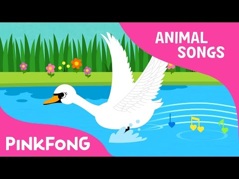 Swan | Animal Songs | Pinkfong Songs for Children
