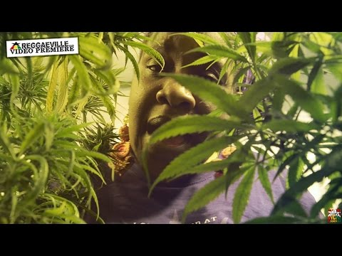 Queen Omega - Ganja Baby [Official Video 2016]