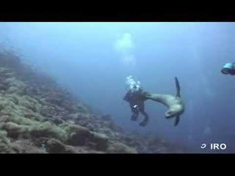 En Galápagos