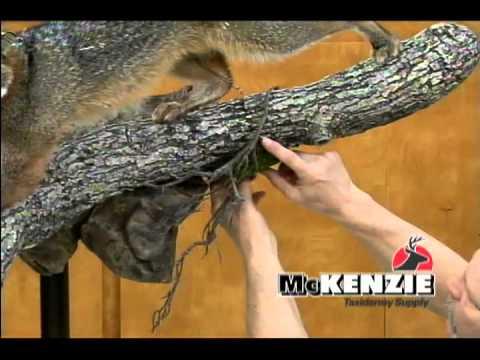 Habitat for a Gray Fox by McKenzie taxidermy