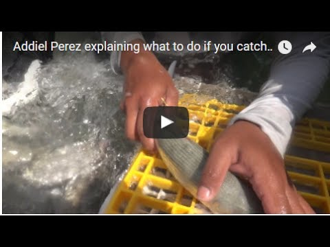 Addiel Perez explaining how to get the number off a tagged fish