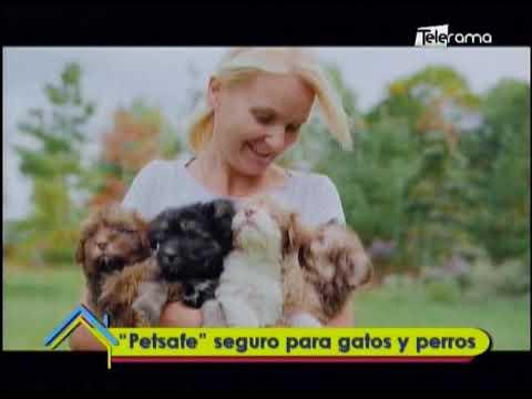 Petsafe seguro para gatos y perros